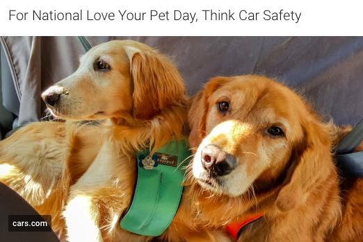 Miami Pet Safety